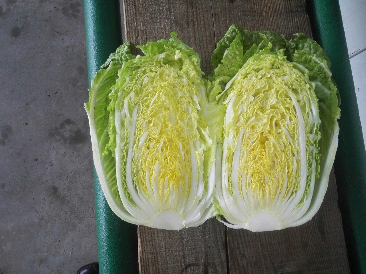 chinese cabbage unnix unnix